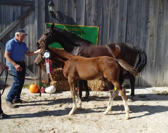 foal futurity winner