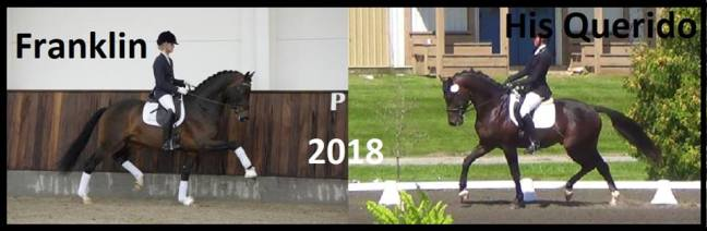 expected2018 foals