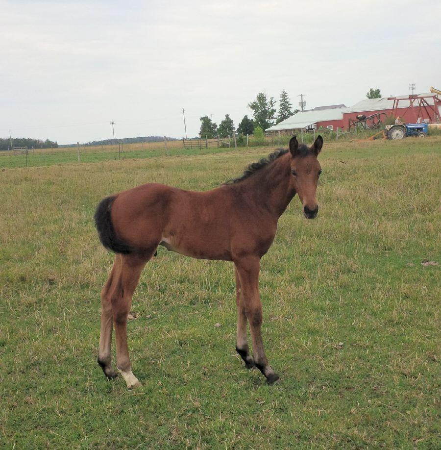 2018 foal
